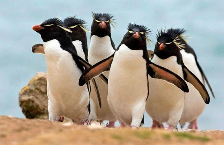 They look like they are lookin for trouble! :-)