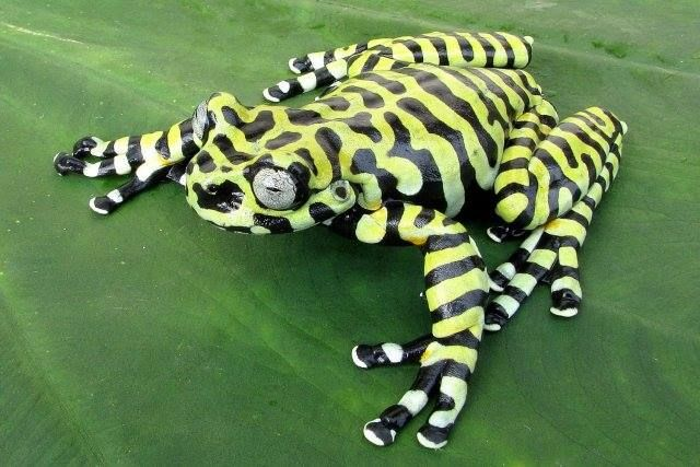 »✿❤Love Frogs!❤✿«amazing and what pretty stripes you have ...I LOVE FROGS !!!!