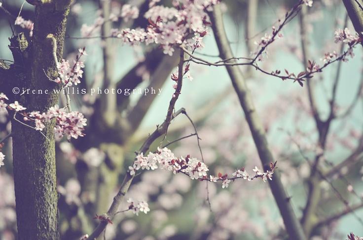 more spring