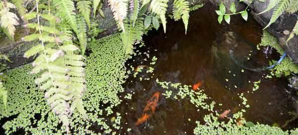 Filtro de estanque o cascada en Quito y Guayaquil