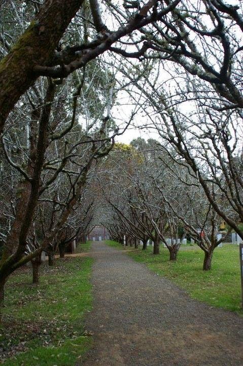 Winter path at the Tasmanian Devil Conservation park
