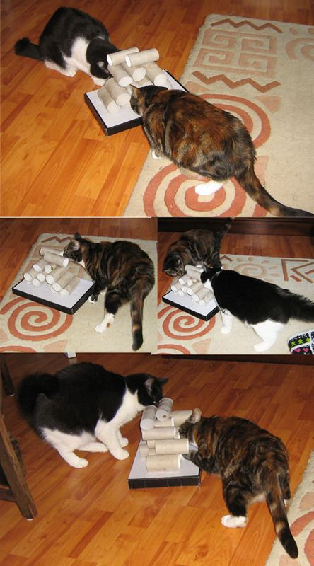 DIY cat toy made out of toilet paper rolls; @Lindsey Grande Grande Grande Gillard, Isabelle would LOVE this!!!