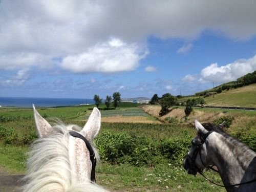 Horse back riding in Sao Miguel= dream come true!