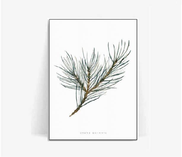 pine tree watercolor botanical poster print/pine leaf print/plant print/herb pine poster herb/botanical print pine tree watercolor/pine leaf by BeautyOfPrints on Etsy