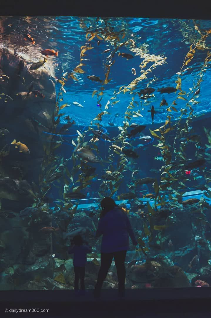 In This Post We Share Tips On What To See At Ripley S Aquarium Of Canada A Popular Attraction In Downtown Toron Ripley Aquarium Toronto Travel Toronto Aquarium