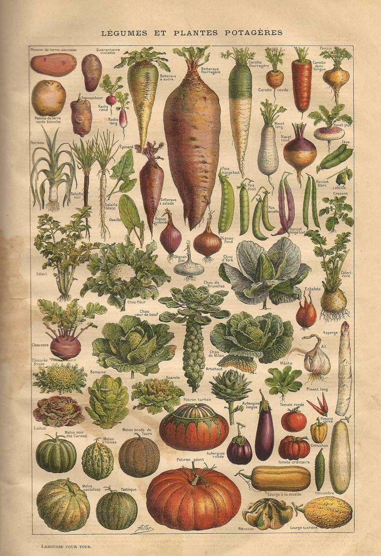 1187 best images fruits vegetables images on pinterest for Plante pour tous
