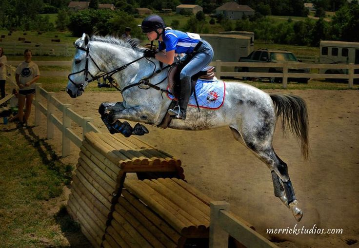 1311 Best Horses Jumping Amp Dressage Amp Eventing Images On
