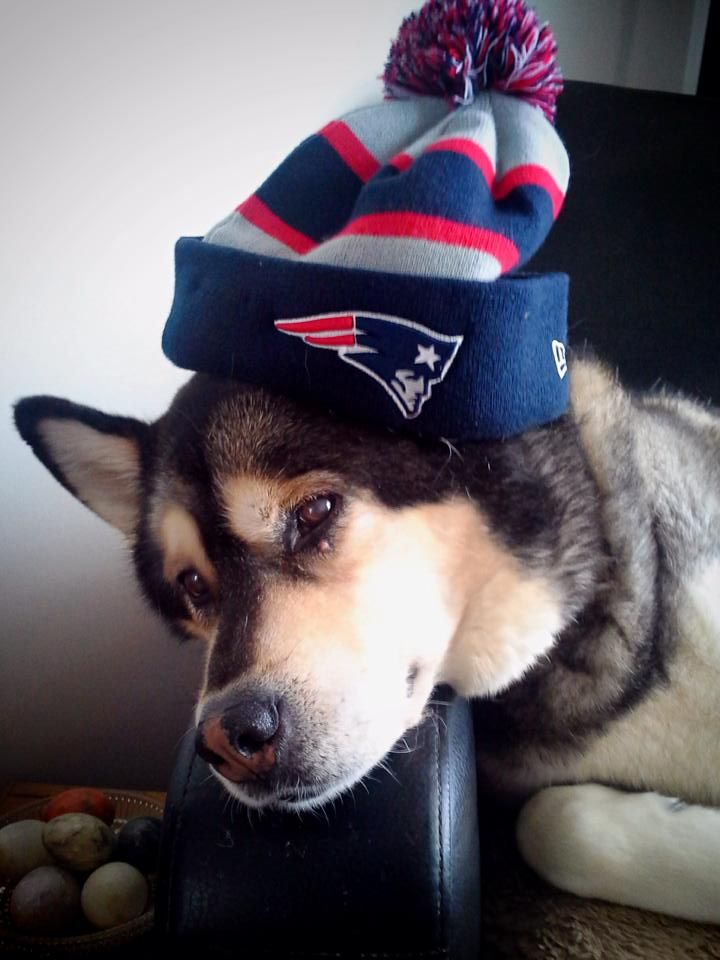 Patiently waiting for Patriots football to return...