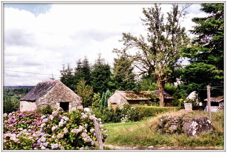 Monts d'Arrée - Huelgoat, Bretagne. 1992 ORTENSIE