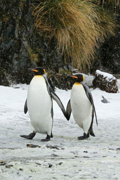 Penguins4life so cute!