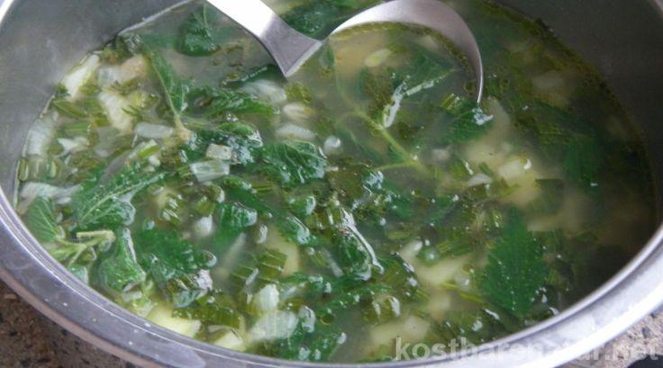 Mit Wildpflanzen lassen sich leckere und nahrhafte Gerichte Zaubern. Hier sind zwei einfache Rezepte für Suppen aus Spitzwegerich- und Brennnesselblättern!