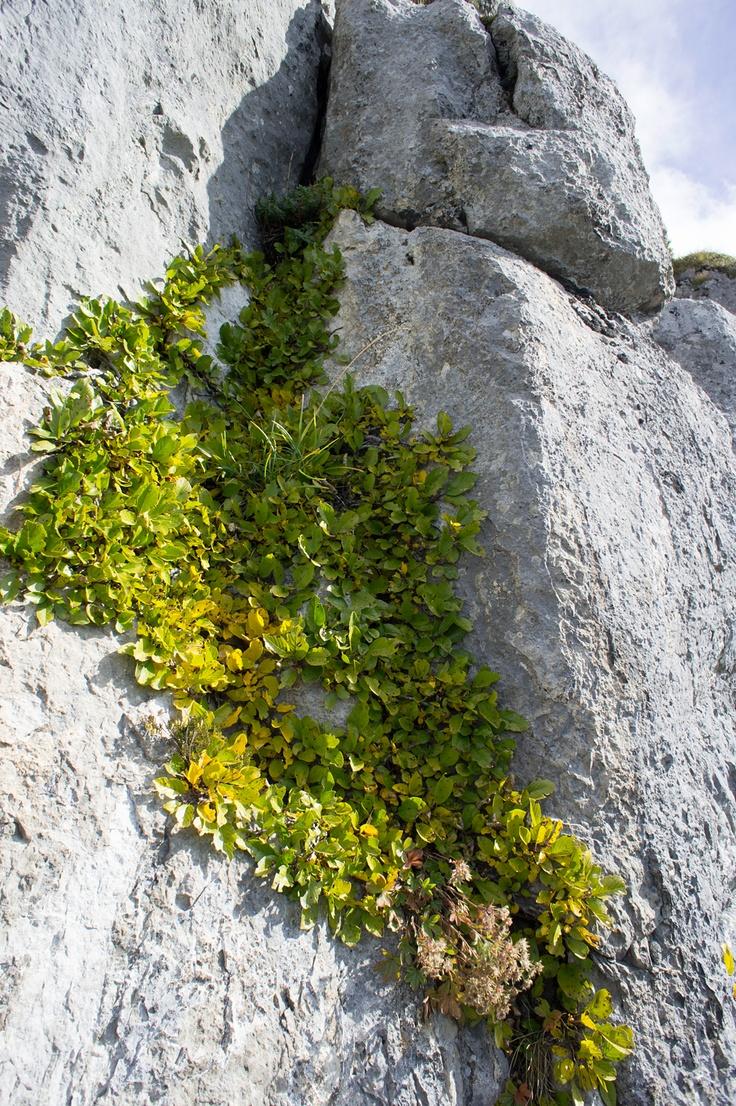 Herbstlicher Pflanzenbewuchs in einer Felsverschneidung