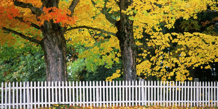 Landscaping Tips for the Fall - How to Take Care of Your Yard in Fall