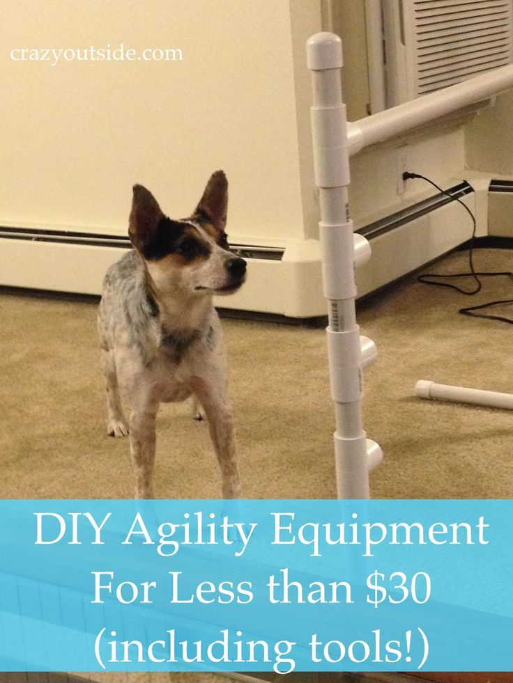 Happy new year, everyone!!! LD (for those new to the blog, my fiance the lovable dork) had the brilliant idea of making agility equipment today for Tasha. Because of her cattle dog high activity le…