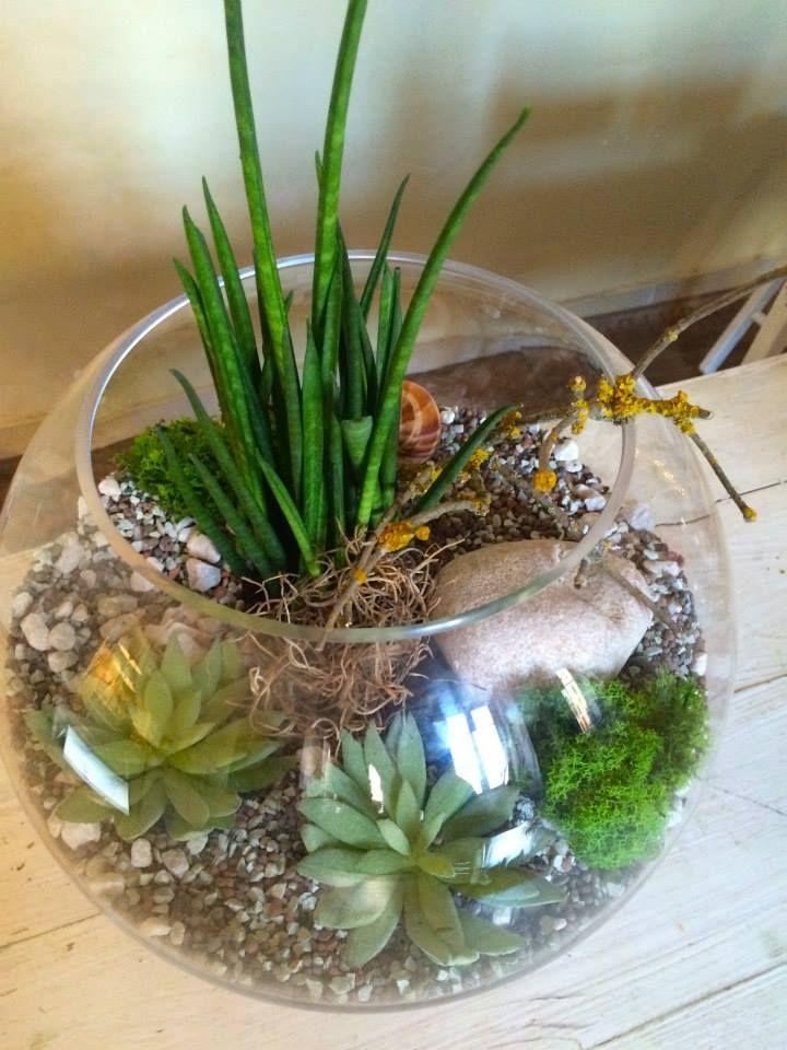 Terrarium design with succulents by ROSMARINO