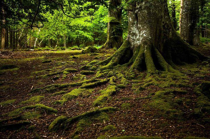 Bosque de Tollymore, Irlanda del Norte - Bosques del mundo que parecen encantados