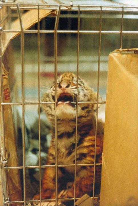 Zoos: Ein Leben ohne Freiheit    Zoos bedeuten, entgegen der Annahme vieler, für die dort eingesperrten Tiere großes Leid und Stress. Die Tiere in Zoos werden ihr ganzes Leben lang gefangen gehalten ohne jemals die Möglichkeit zu bekommen, sich ihrer Art gerecht zu entwickeln und ihren Bedürfnissen und Interessen nachzugehen. Sie haben jegliche Kontrolle über ihr Leben und die Umwelt, in der sie aufwachsen, verloren.