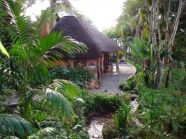 Jungle surroundings -Phophonyane Lodge and Nature Reserve. Quote and book http://www.south-african-hotels.com/hotels/phophonyane-falls-ecolodge-swaziland/