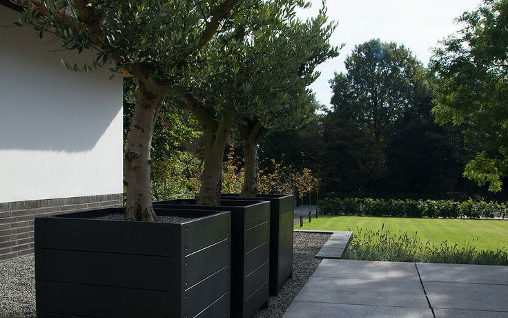 Zicht vanaf het hoofdterras van de villa. Grote 80x80cm zwart geschilderde eikenhouten bakken met olijfbomen sieren op het splitpad wat naar de kantoorruimte loopt.