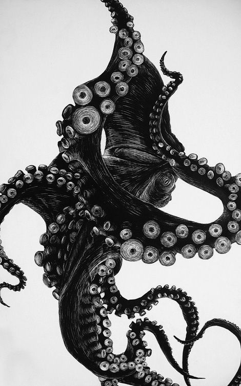 A fine illustration of an Octopus by Tierra Connor. Silhouette painted with india ink onto a clay scratchboard. Detail added using an xacto knife.