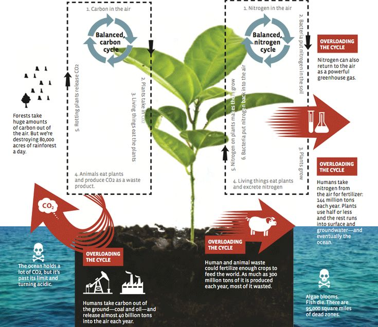 Great graphic showing the carbon cycle and the nitrogen cycle that normally work in a sustainable way.