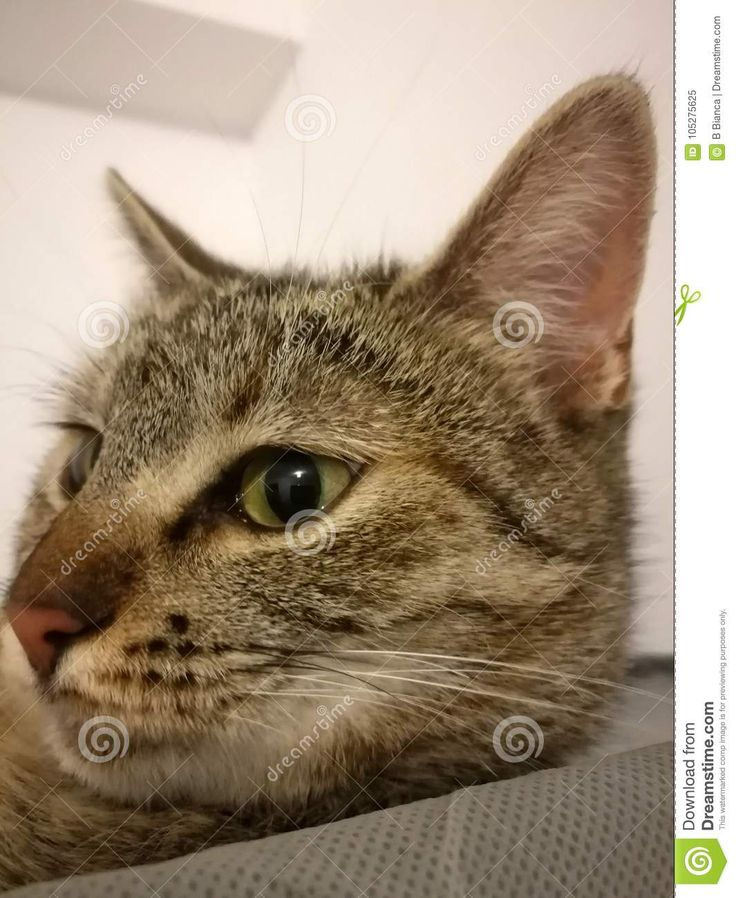 Photo about Cat on white background with green eyes - 105275625