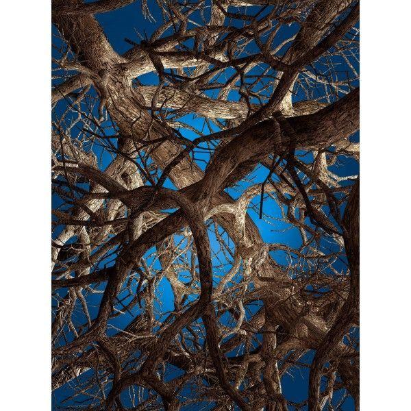 Moooi Carpets Liquid Maple vloerkleed 300x400. Het is niet te zien wat nu eigenlijk de kijkrichting is, of hoe veel bomen er zijn. Net zo complex als het leven zelf! @moooicarpets #MoooiCarpets #vloerkleed #vloerkleden #design #Flinders