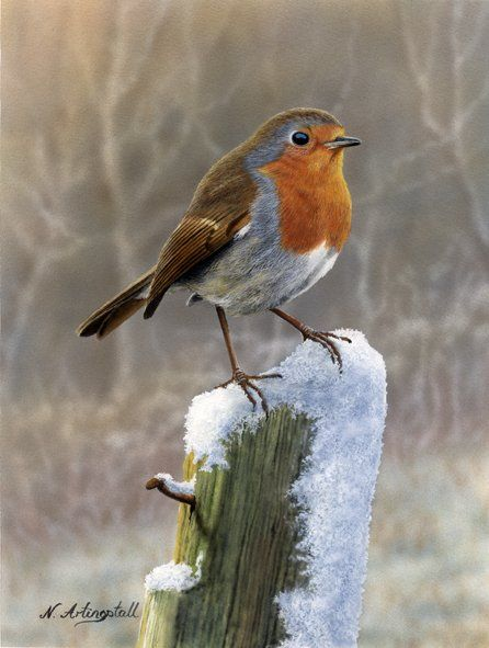 Robin tattoo inspiration--- I am amazed at how those robins tiny feet and legs are not totally frozen in the snow... For me it is such a good representation of Strenght.