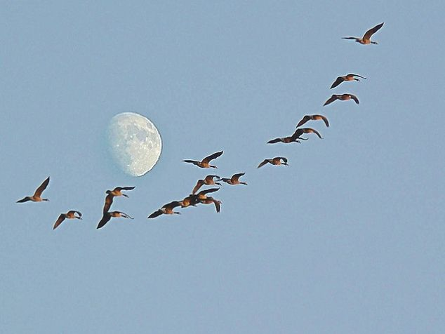 Wild Geese That Fly With The Moon on Their Wings - FaveThing.com