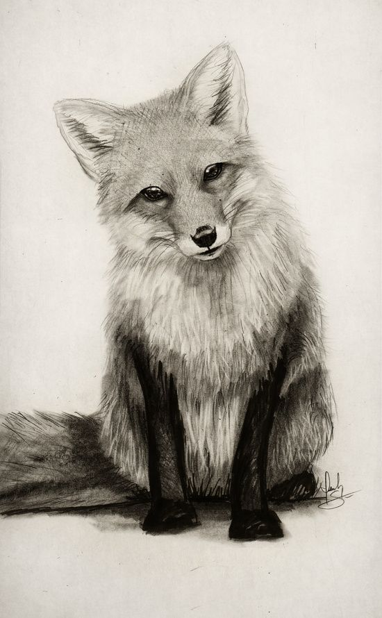 Best 20 Fox Sketch Ideas On Pinterest Drawing Tattoos And Simple Animal Drawings