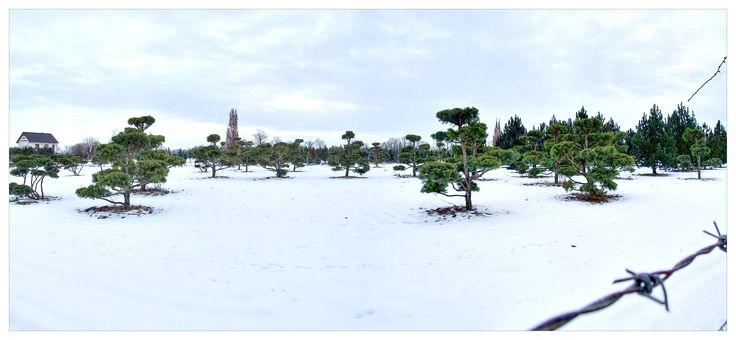 A takto vypadají naše pole v zimě (když náhodou napadne sníh).