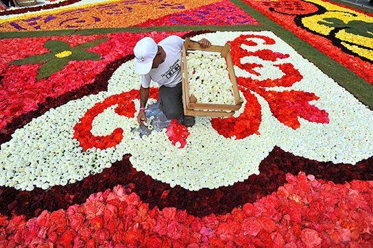 Carpet Of 700,000 Flowers In Brussels, Belgium!