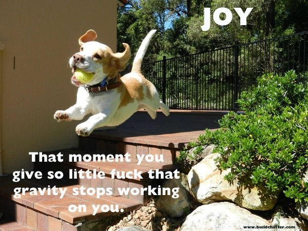 <3 it!: Flying, Ball, Pet, Happy Puppys, Beagles, Funny, Happy Dogs, Photo, Animal