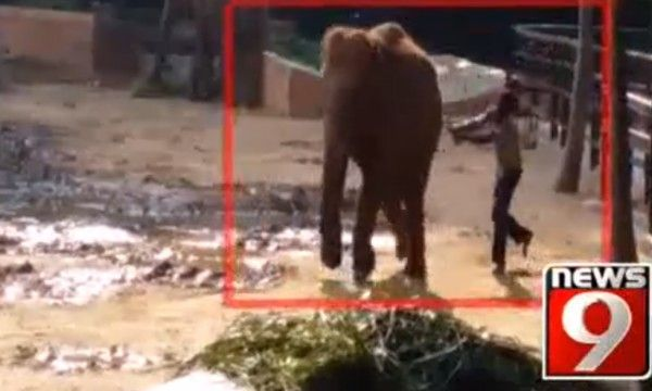 OUTRAGEOUS!  DEMAND INVESTIGATION! Caretaker pounds elephant calf with iron rod!  This zoo needs to be held accountable for this heinous brutality!  PLEASE SIGN AND SHARE IN PROTEST!!!