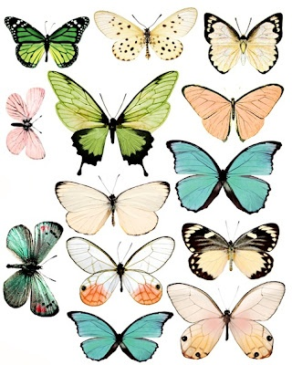 cute & beautiful illustration of butterflies, love the colours!