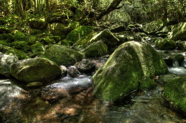 Princess Mononoke Forest
