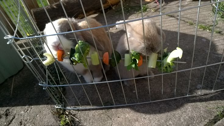 Veggie Kebabs for your bunny Rabbit, they love it. Click to see more bunny boredom busters on Carly's Mini Lop Bunnies