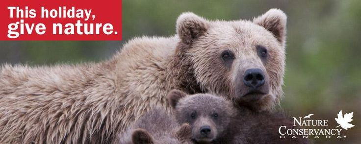 Help #protect #habitat for species like the grizzly bear. This holiday, gift the gift of nature! giftsofnature.ca