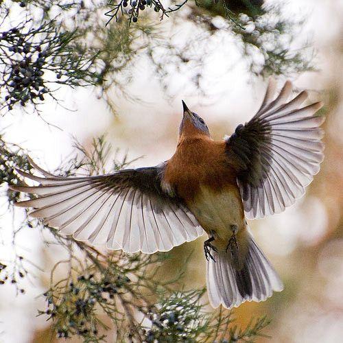 Ravishing image of bird in flight.  [Source: Indigo Dreams]