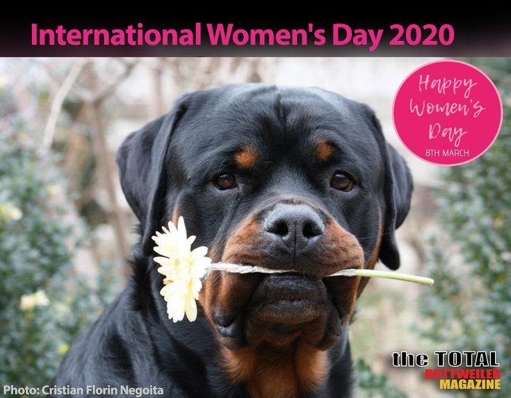 Happy international womens day rottweiler breed