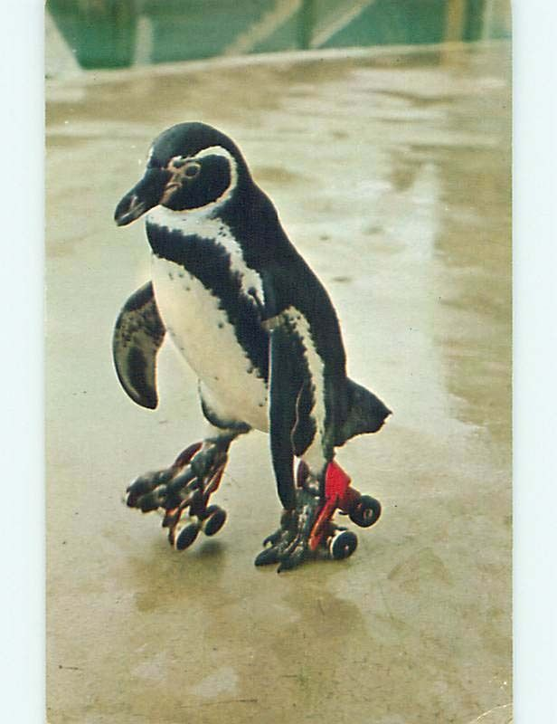 1982 CRAZY POSTCARD  RO  Animals on Skates  Penguins