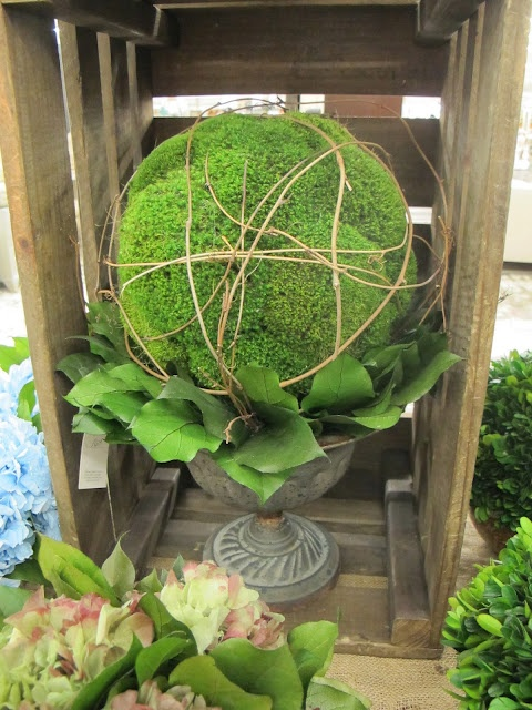 moss ball in an urn