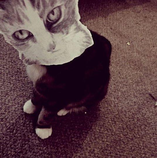 paper kitten 1 Nell Beaumont