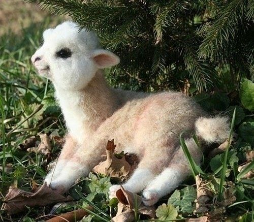 someone quick. just punch me in the face and put me out of my misery. a baby alpaca that looks fake but isn't. omg!