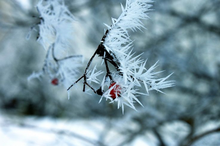 Sharp frost   by Siniirr