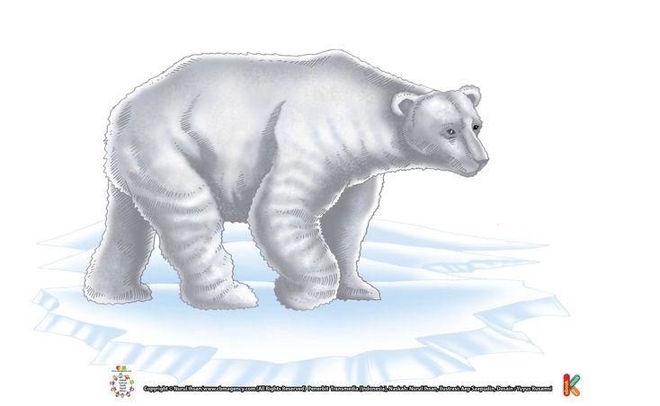 Rambut Beruang Kutub Transparan dan Berongga