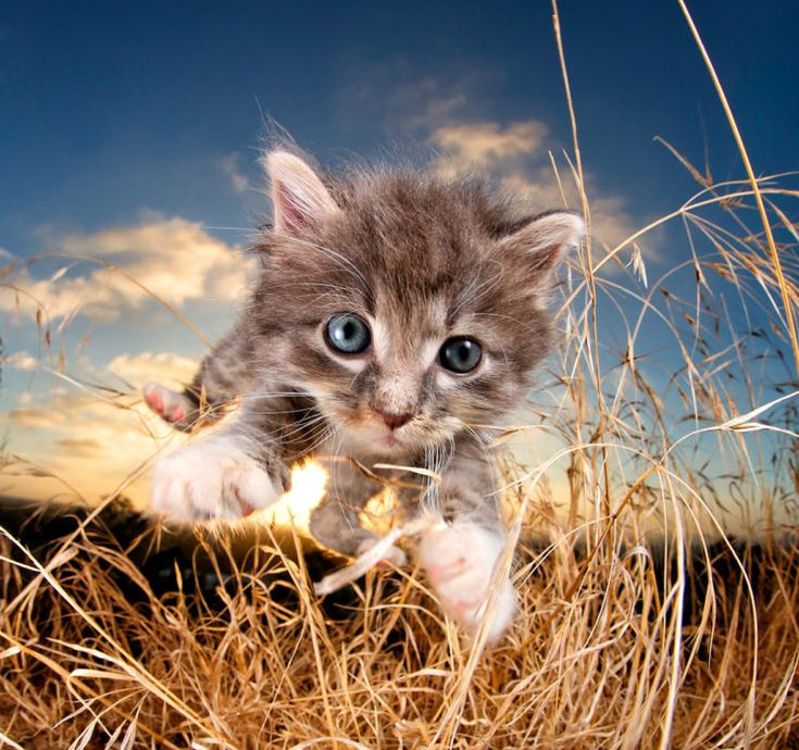 Playful Portraits of #Kittens Mid-Pounce #Cats #Photography