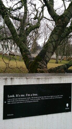 Trees also get a special attention.