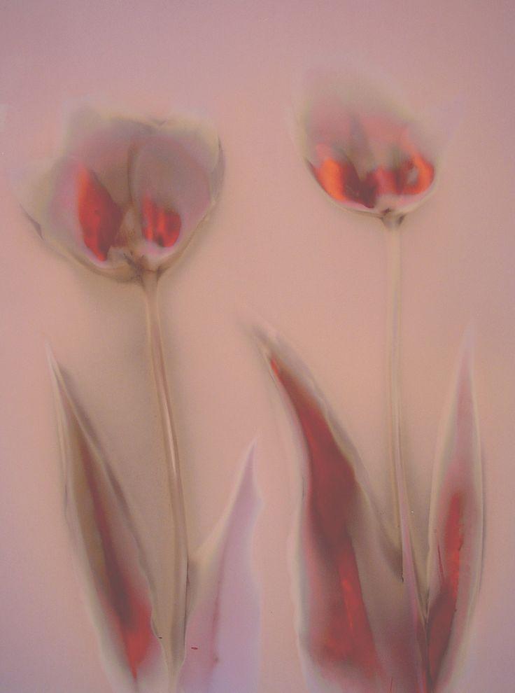 Lumen Print 1058 Tulips by John Fobes