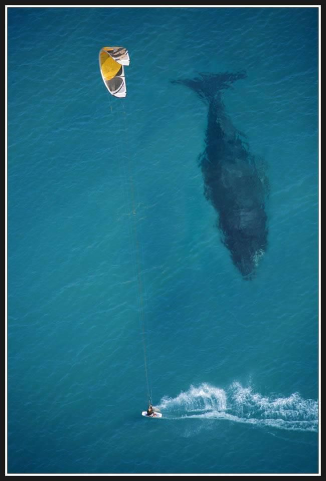 Whales are BIG! See one up close off the coast of South Africa in the town of Hermanus.